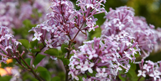images/stories/header/majjun/left/DSC_4139.jpg