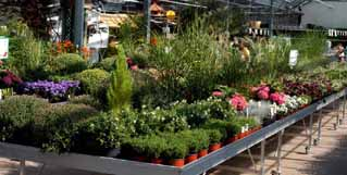 images/stories/header/majjun/right/HC02.jpg